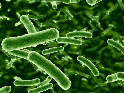 Probiotica-Bacteria