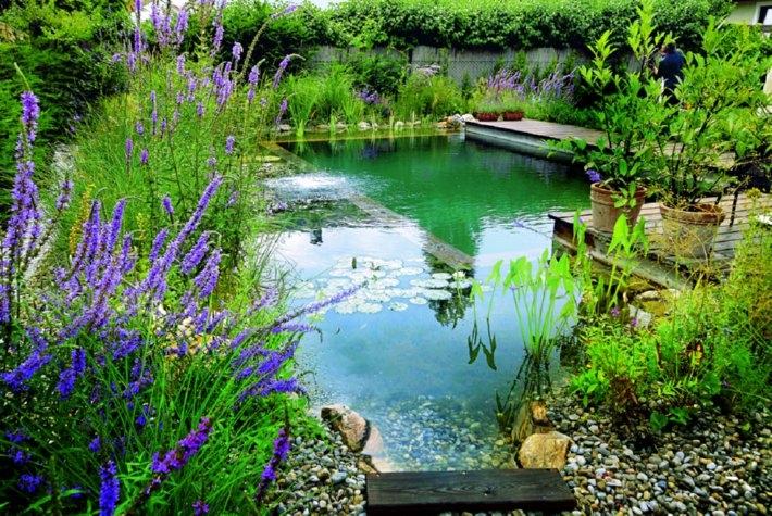 natural-pond